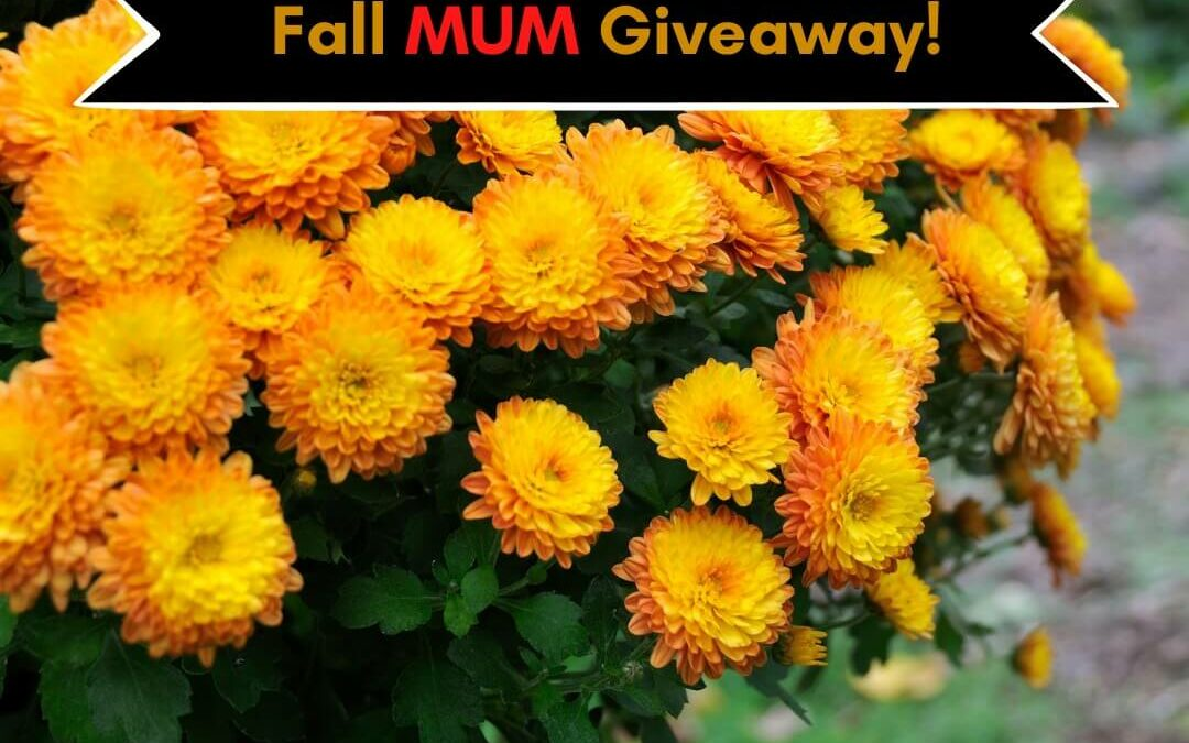 Happy Fall Giveaway!!